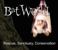 BWS-logo-square